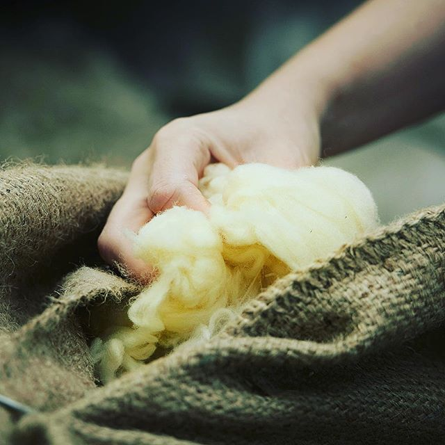 Benefits of wool 🧶 #Sustainability.  When it's 'out with the old', wool will naturally bio-degrade. It is a totally natural product, entirely renewable and sustainable. And it is 100% biodegradable – a very important feature in a world that is increasingly concerned about the environment. #wool #merinowool #choosewool #sustainableclothing #fabricofanation #clothmerchant